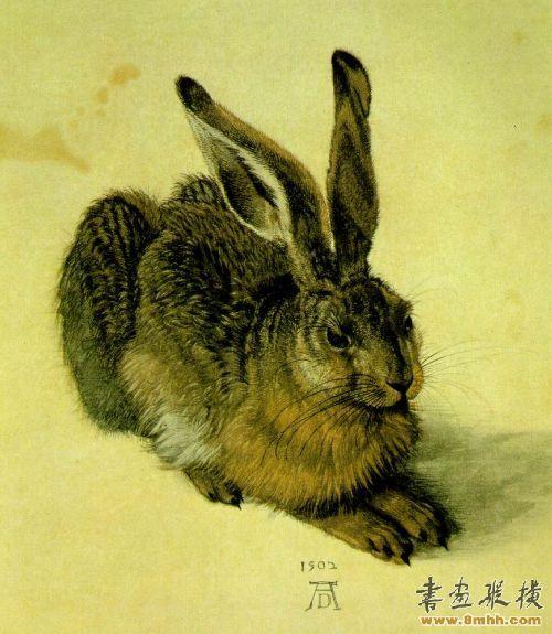 丢勒兔子绘画步骤