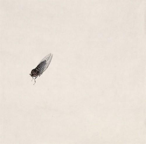 蝉 齐白石 30.5cm×30.5cm 无年款 纸本设色 北京画院藏