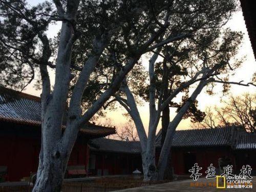 两株千年古树见证了这里的沧桑风云。