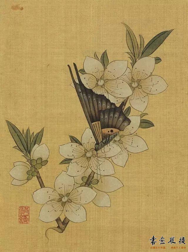 《桃花蝴蝶》
