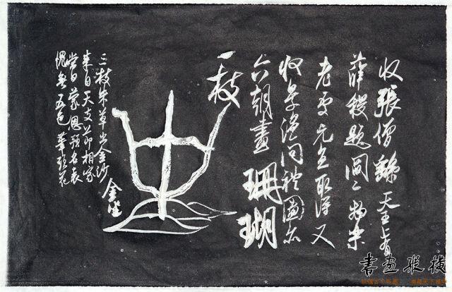 珊瑚帖用图(3)